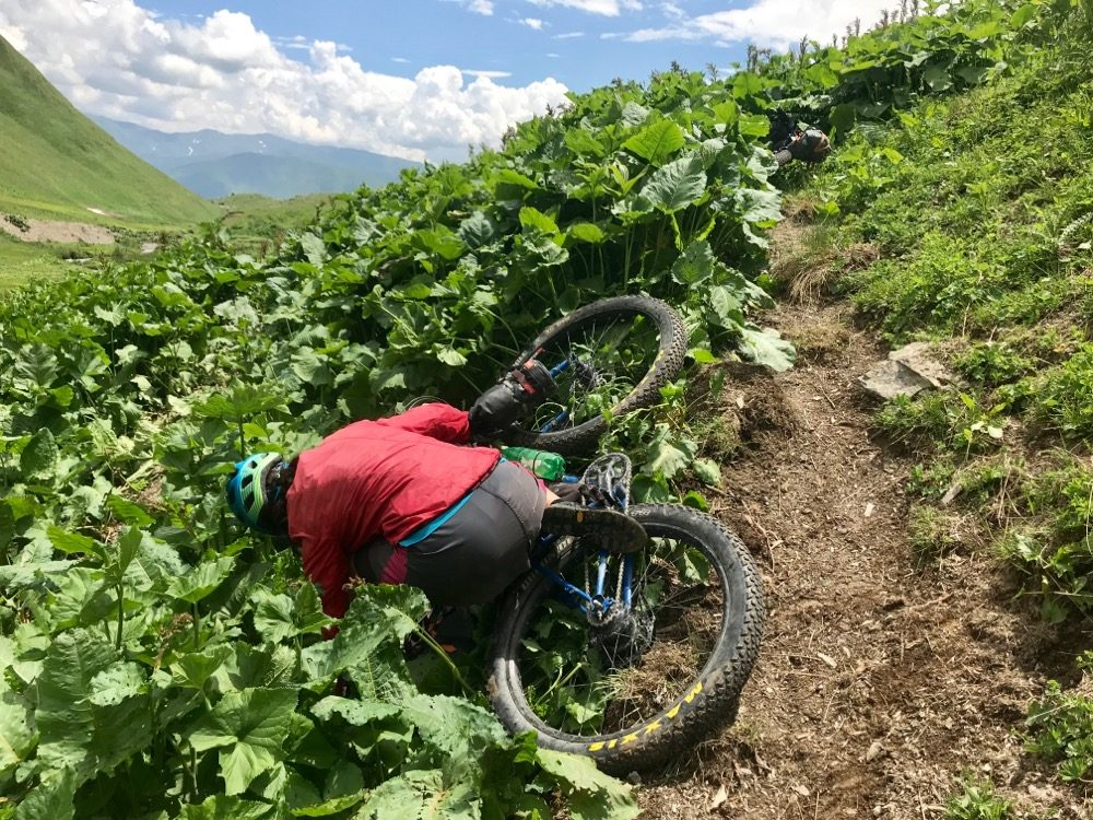 Tired Jo has a closer inspection of the vegetation on the downside of the track!